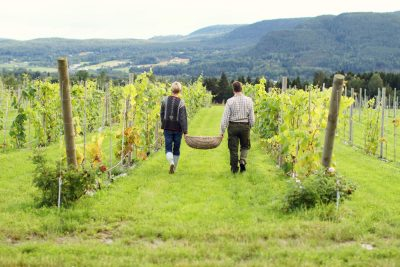Par som går mellom vinrankene på en norsk vingård. en overnatting her er en perfekt bursdagsgave til han som har alt.