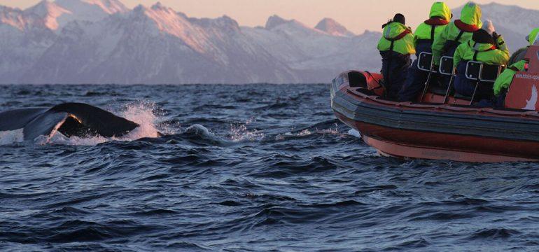 Spekkhogger safari i Norge. Et perfekt julegavetips til kjæresten han vil elske.