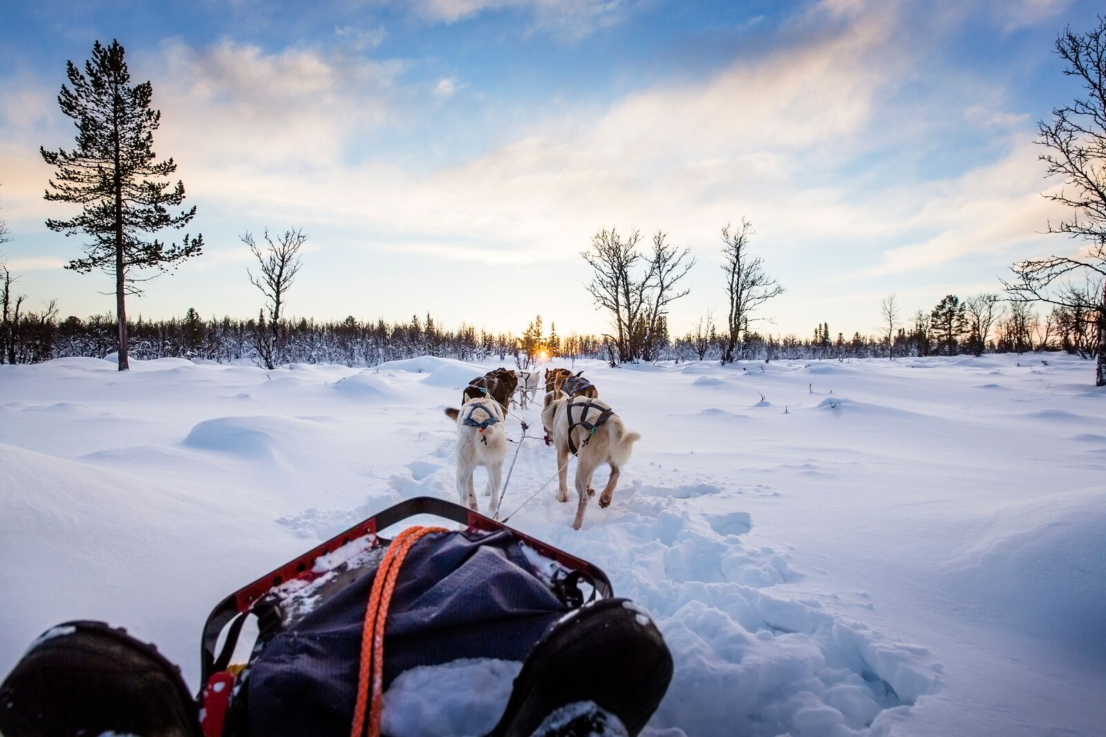 Hundespann som trekker en slede innover i et vakkert snødekket landskap. En perfekt ting å gjøre med kjæresten.