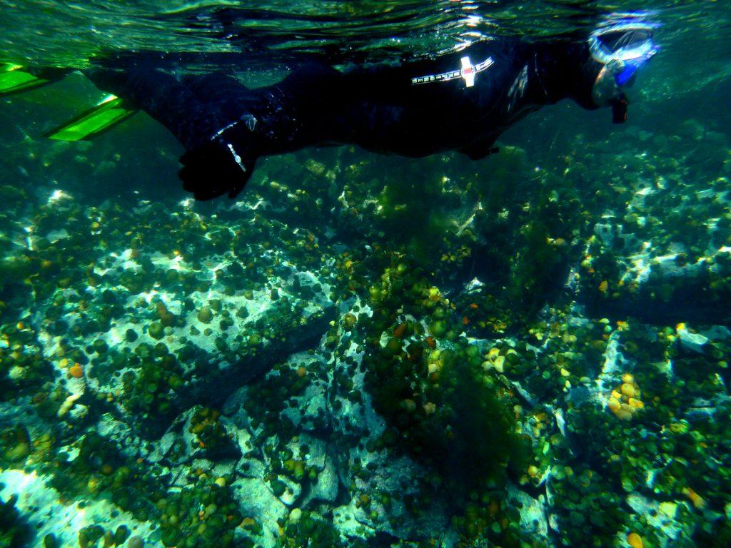 Opplev Norge på sitt beste med snorkling i lofoten