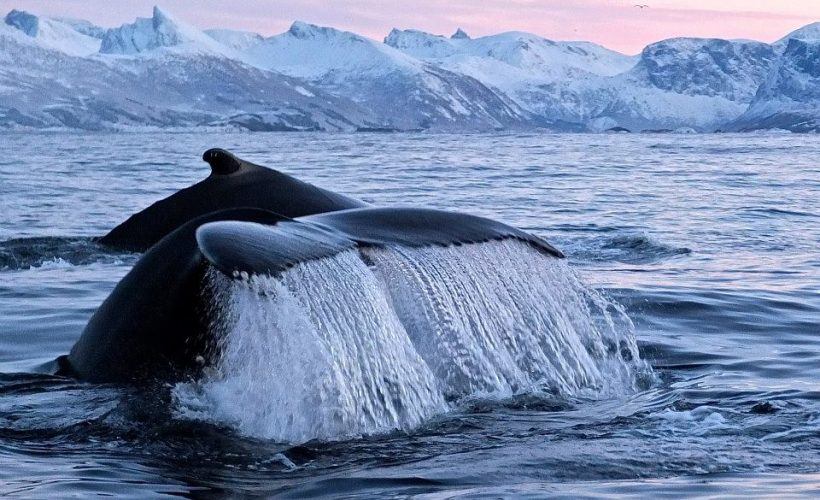 opplev det beste av norge på hvalsafari